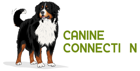 The Canine Connection of Fayetteville Arkansas